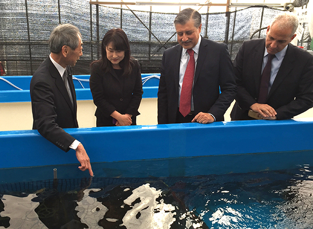 The IRENA Director-General and Chief of Staff inspect a shrimp farm